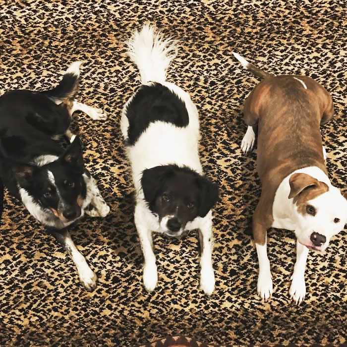 pichers of dogs