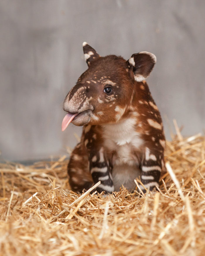 30+ Adorable Rare Baby Animals You've Never Seen Before