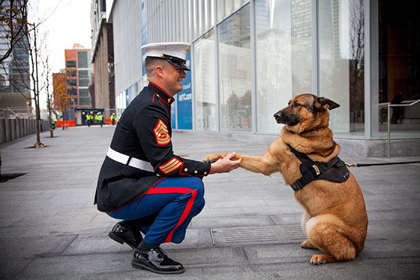 A Retired Us Marine Corp Dog