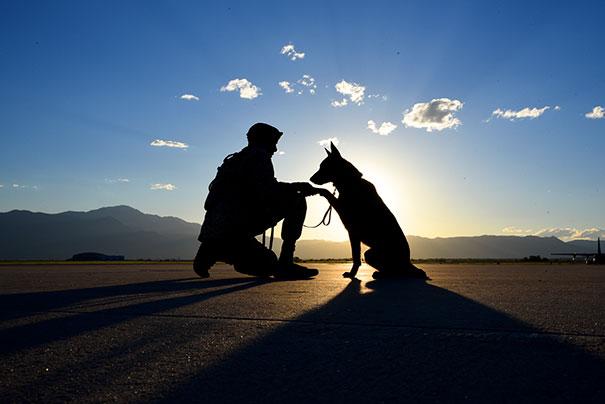 Military Dog