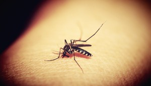 Facts About Mosquitoes
