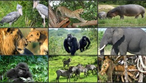 Places to See Wildlife Up Close