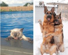 Hilarious Photos Of Animals