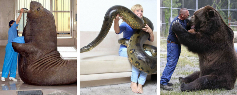 14 Staggering Images Show When The Animal Kingdom Gets SUPER-SIZED