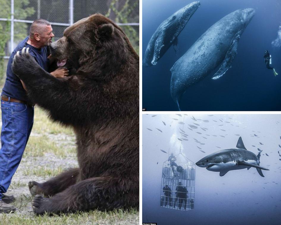 Animal Kingdom Gets SUPER-SIZED