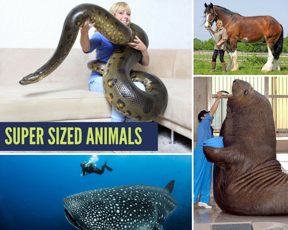SUPER SIZED Animals