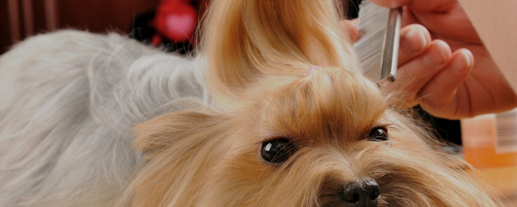 Know Well About Dog Clippers And Acquire The Grooming Skills Before Taking The Onus Of Grooming Your Pet