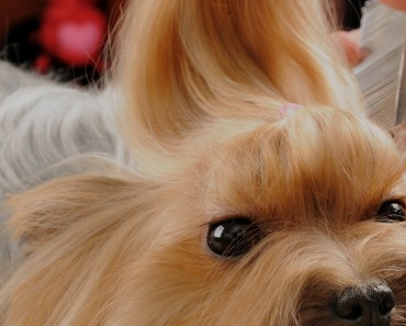 Dog-Grooming-Comb