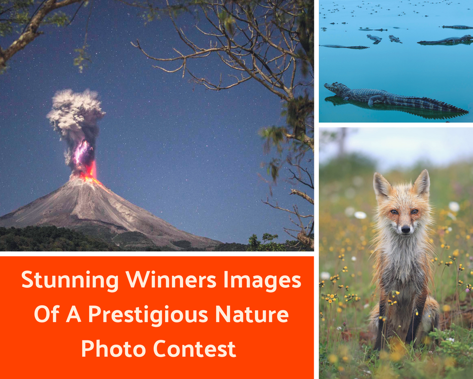 Stunning Winners Of A Prestigious Nature Photo
