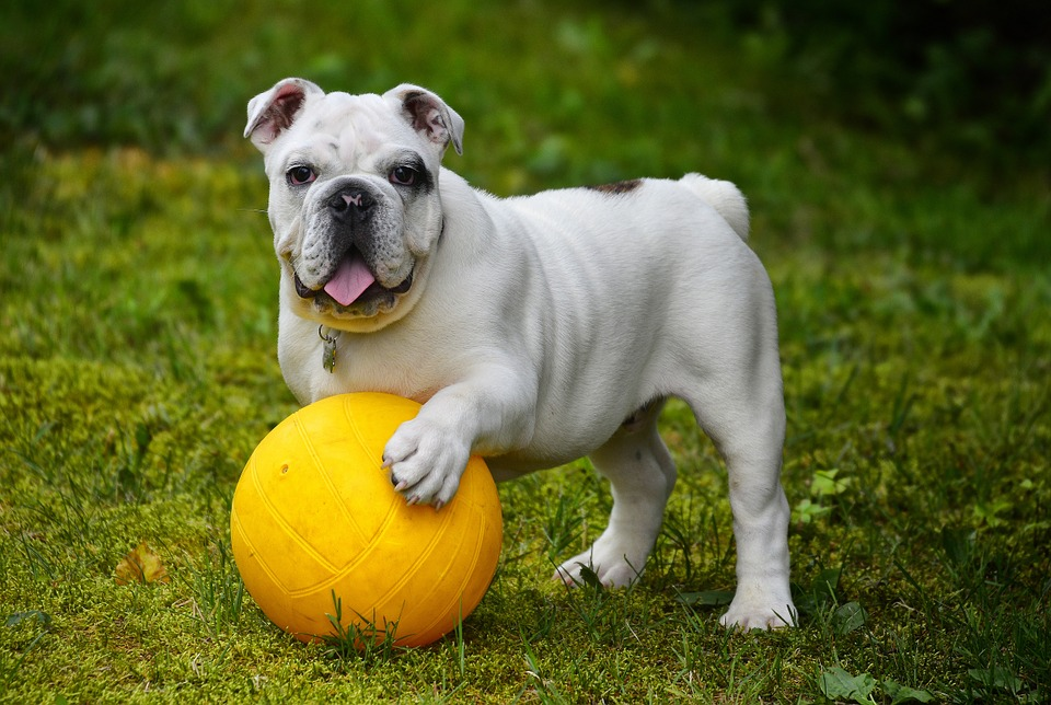 How You Can Make Your Yard A Safe Playground For Your Dog
