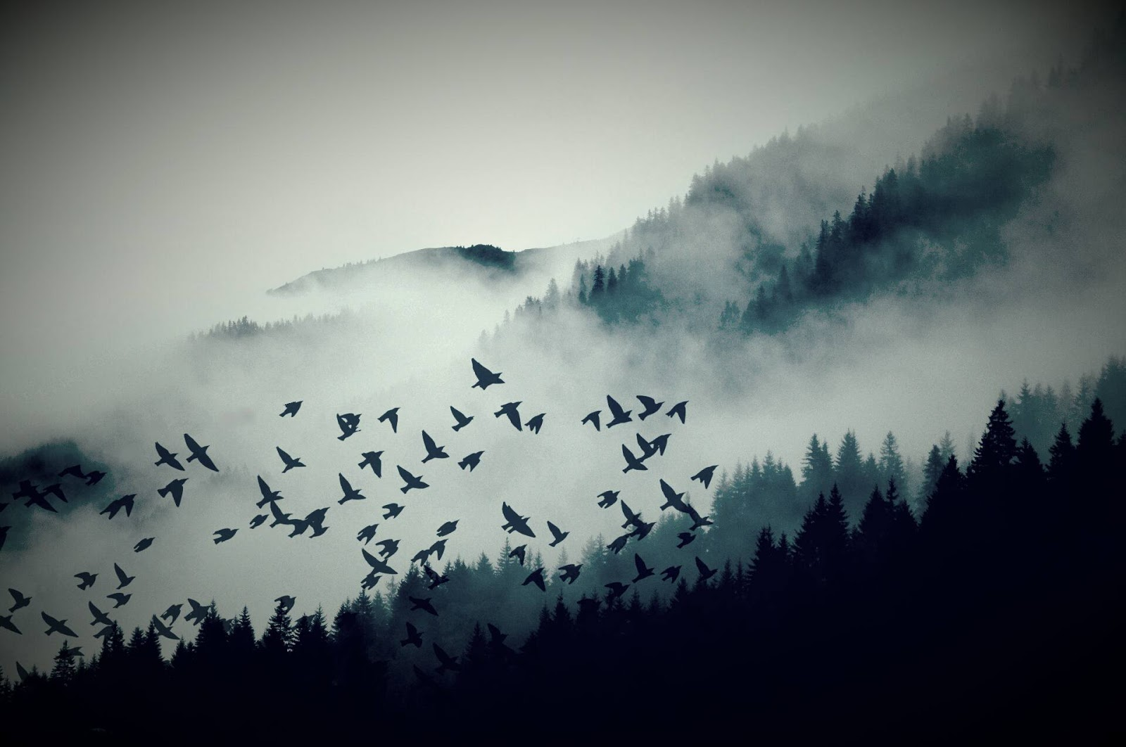 Birds Committing Suicide On Moonless Nights - Astounding Facts That Can Leave Anyone Baffled