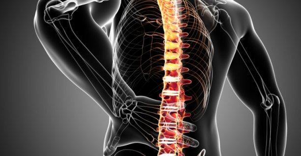 Chiropractic- Structure
