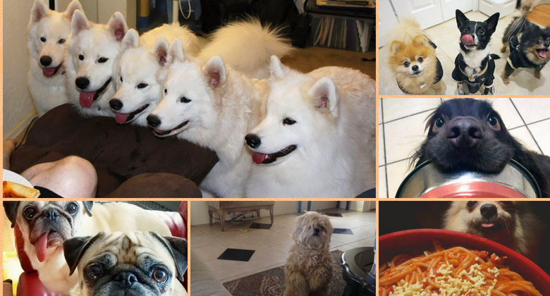 50 Funny Photos Of Hungry Dogs Will Surely Whet Your Appetite Too!