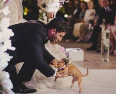 Exorcism By Marriage – Human-Animal Weddings