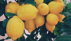 Health Benefits Of Drinking Lemon Water_5