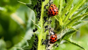 5 Important Reasons Why You Should Consider Pest Control Services