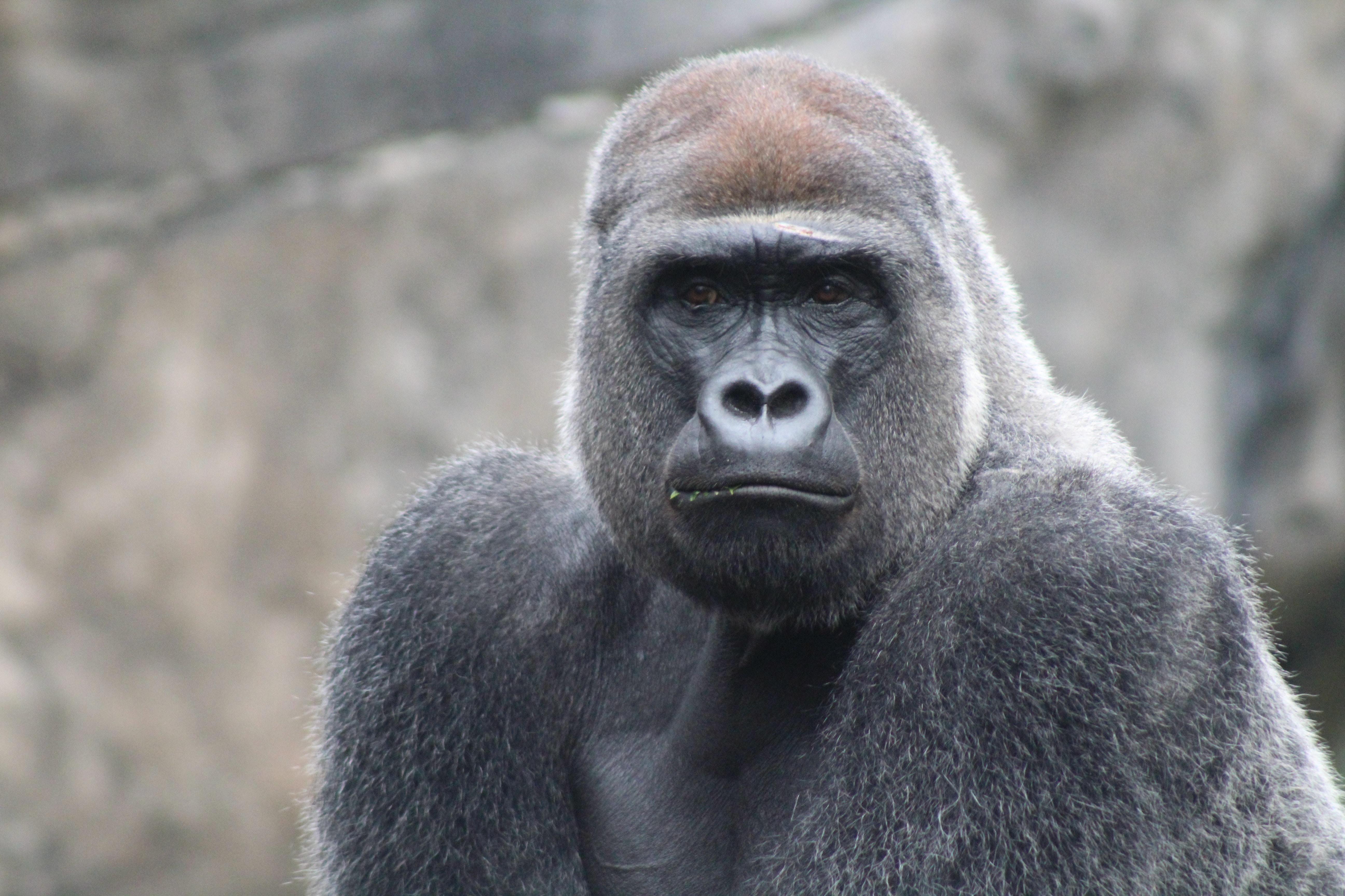 Planning A Gorilla Tour In Uganda