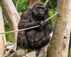 Planning A Gorilla Tour In Uganda_1