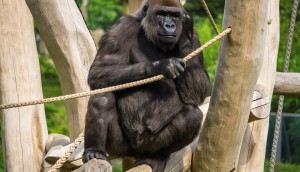 Planning A Gorilla Tour In Uganda_1