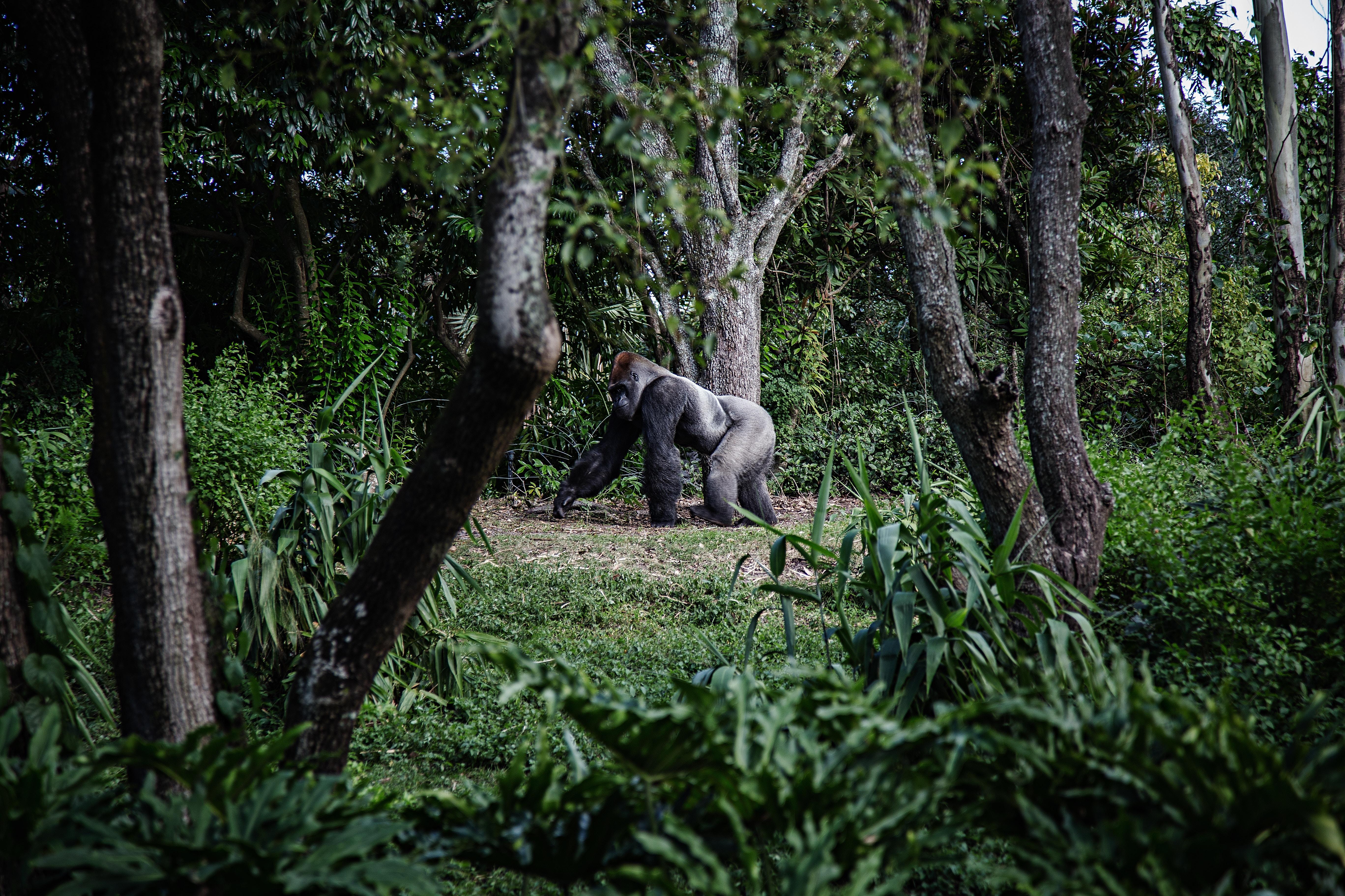 Planning A Gorilla Tour In Uganda_2