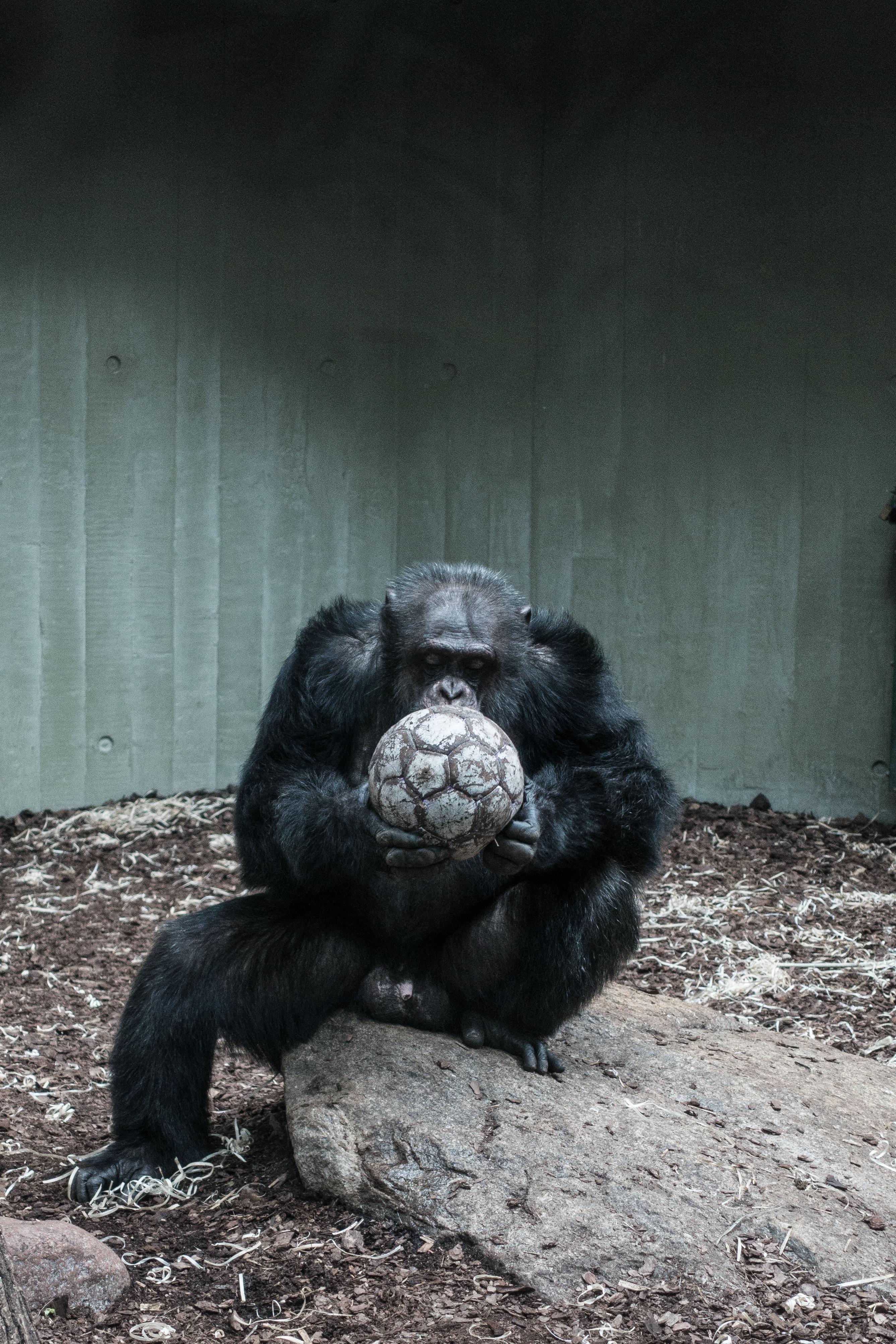 Planning A Gorilla Tour In Uganda_4