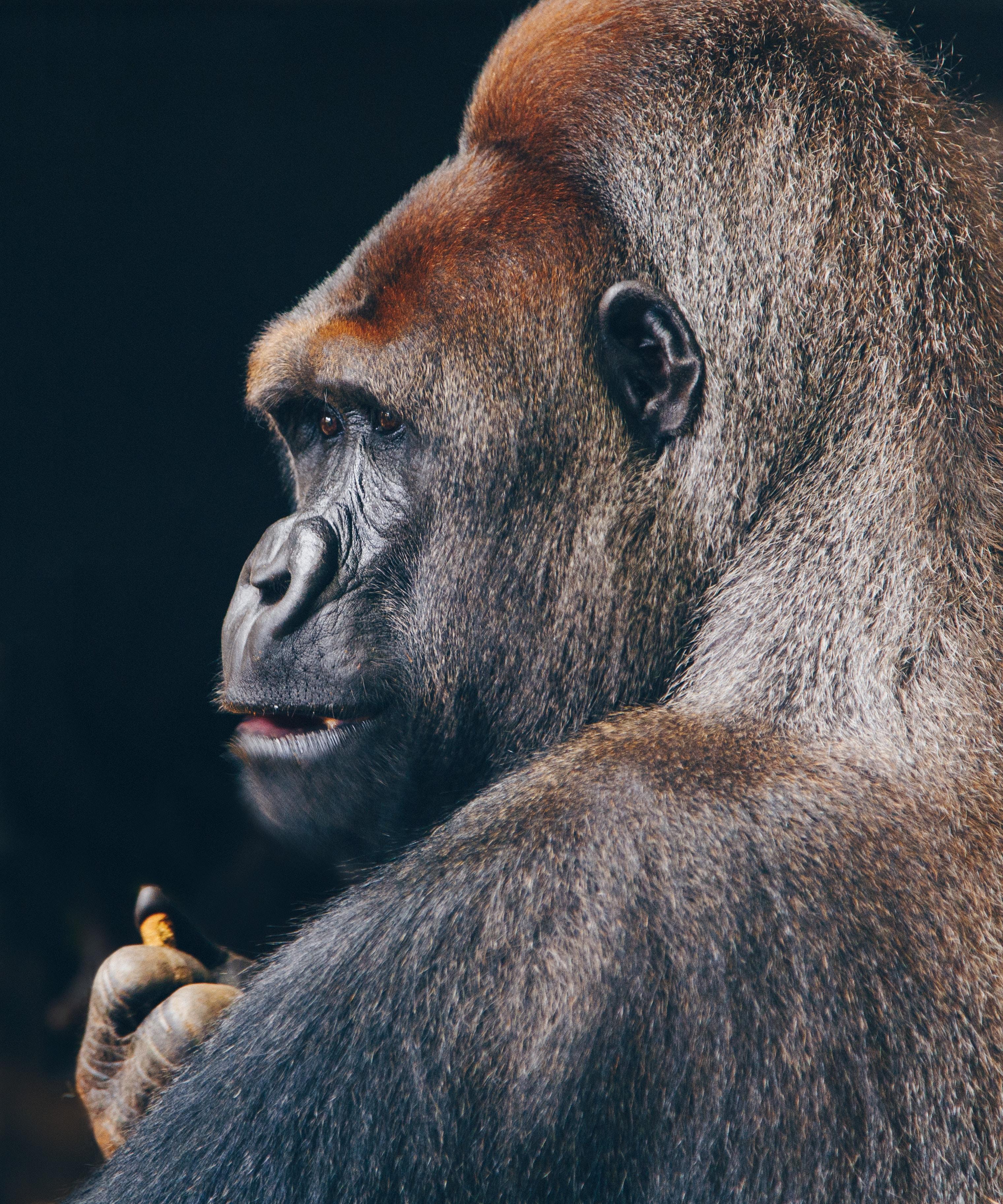 Planning A Gorilla Tour In Uganda_5