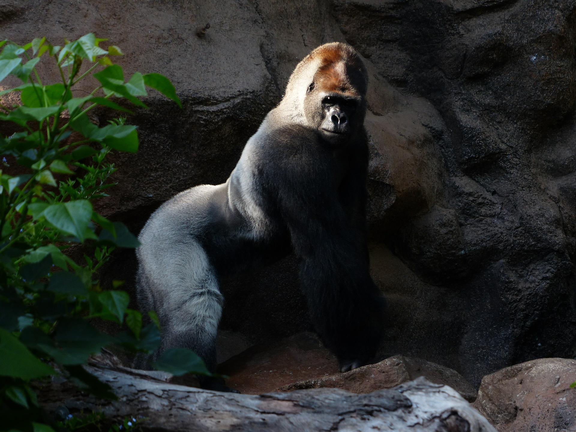 Planning A Gorilla Tour In Uganda_6