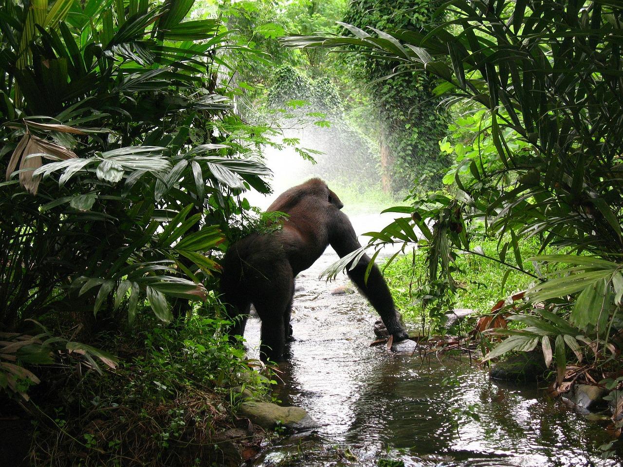 Planning A Gorilla Tour In Uganda_3