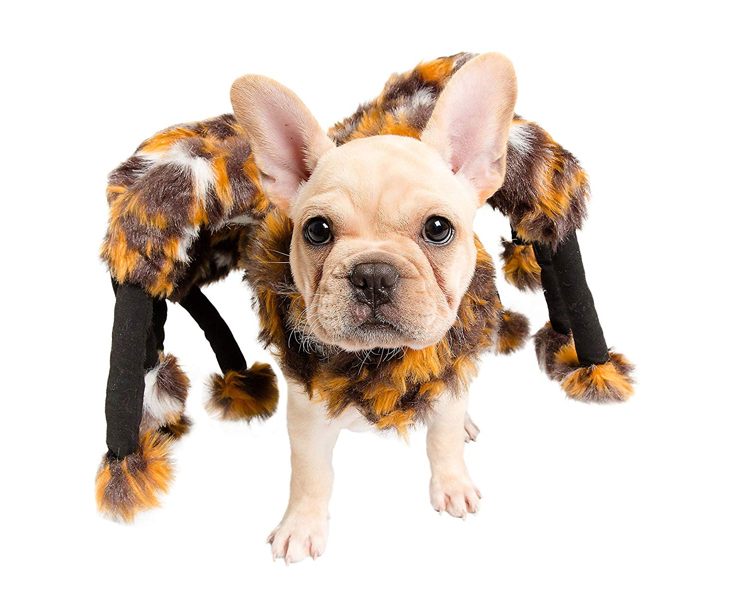 Spider Dog Costume - Cat Costume - Pet Costumes by Pet Krewe