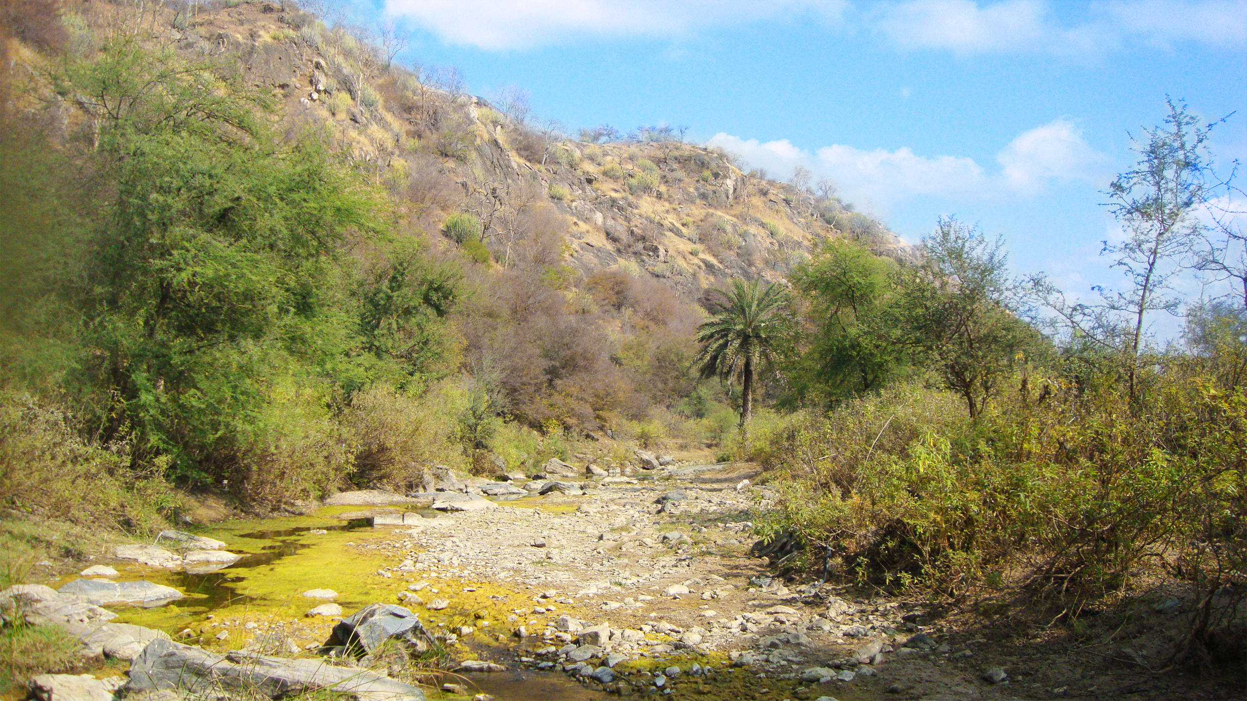 Todgarh Raoli Wildlife Sanctuary