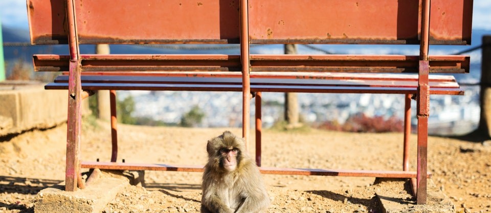 Arashiyama Monkey Park Iwatayama - Tourist Destinations In Kyoto