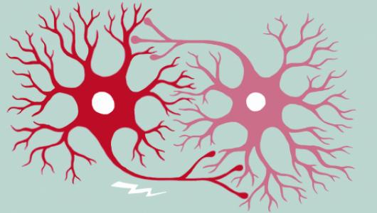 Fundamentals of Neuroscience, pt 1-edx