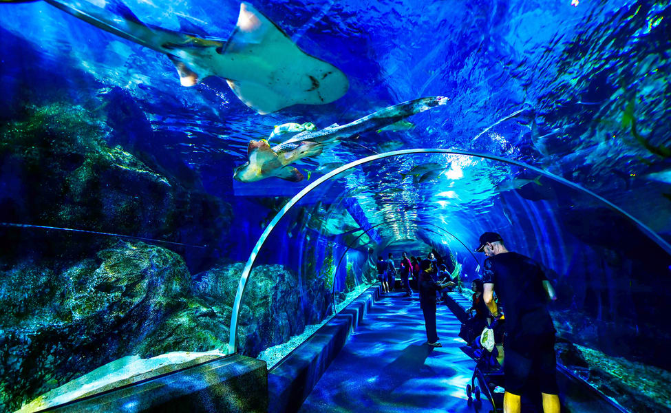 Enjoy Swimming With Sharks At Siam Ocean World