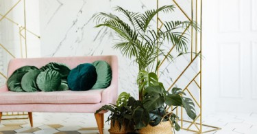 The Top Tips for Taking Care of an Indoor Palm Tree