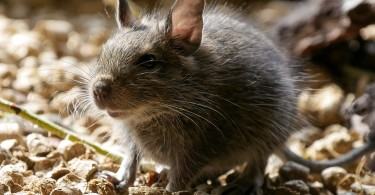 How to Discourage Pest Infestation in Your House