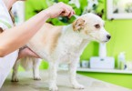 Flea Control For Pets And Professional Flea Control Services