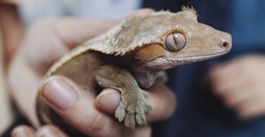 The Ultimate Ways To Care For A Bearded Dragon