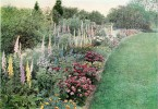 Perfect Perennial Border