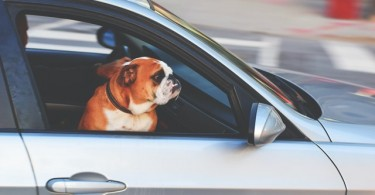 Top 6 Car-Buying Tips For Dog Owners