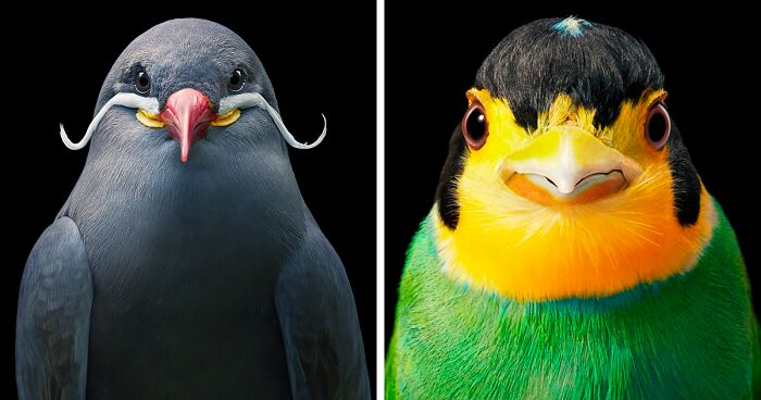 Portraits Of Rare And Endangered Birds