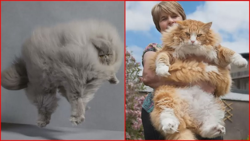 Fluffiest Cats
