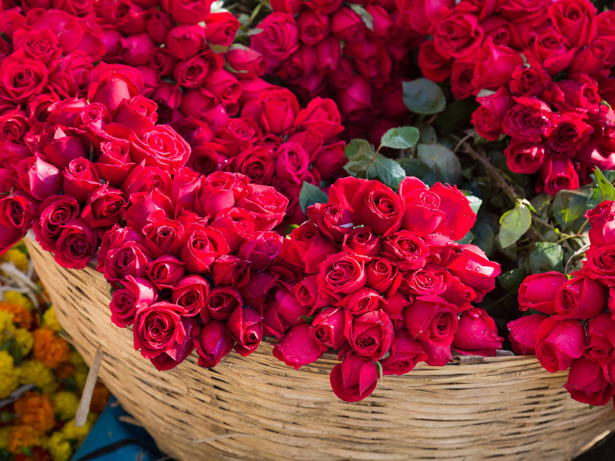 Roses Are A Sign Of Love