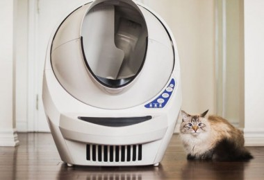 things pet owners will buy
